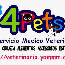 4Pets Servicio Médico Veterinario 100% a Domicilio img-0