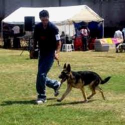 Adiestramiento Canino img-0