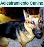 Logo de Adiestramiento Canino