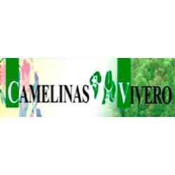 Camelinas Vivero img-0