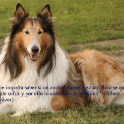 Centro de Protección Canina de Morelia, AC img-2
