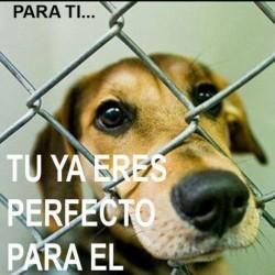 Centro de Protección Canina de Morelia, AC img-3