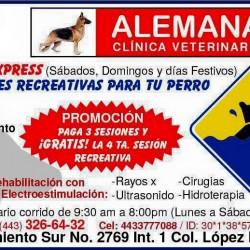 Clínica Veterinaria Alemana img-4