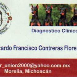 Diagnóstico Clínico Veterinario Dogs House img-0