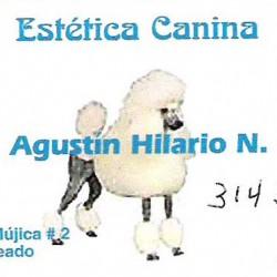 Estética Canina img-0