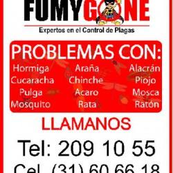 Fumy Gone img-0