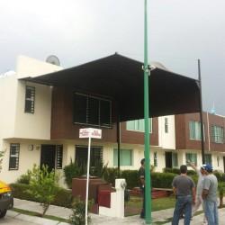 Lonas Morelia img-5