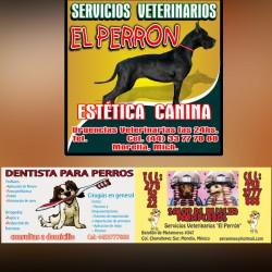 Servicios Veterinarios El Perrón img-0