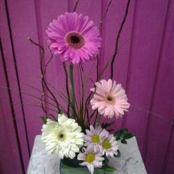 Vida Flor img-19