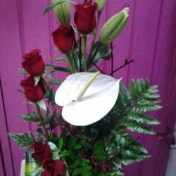 Vida Flor img-11