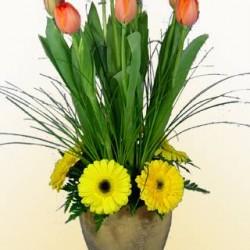 Vida Flor img-10