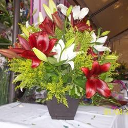 Vida Flor img-1
