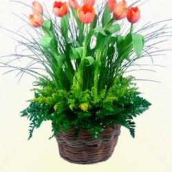 Vida Flor img-17