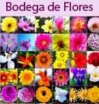 Logo de Bodega de Flores